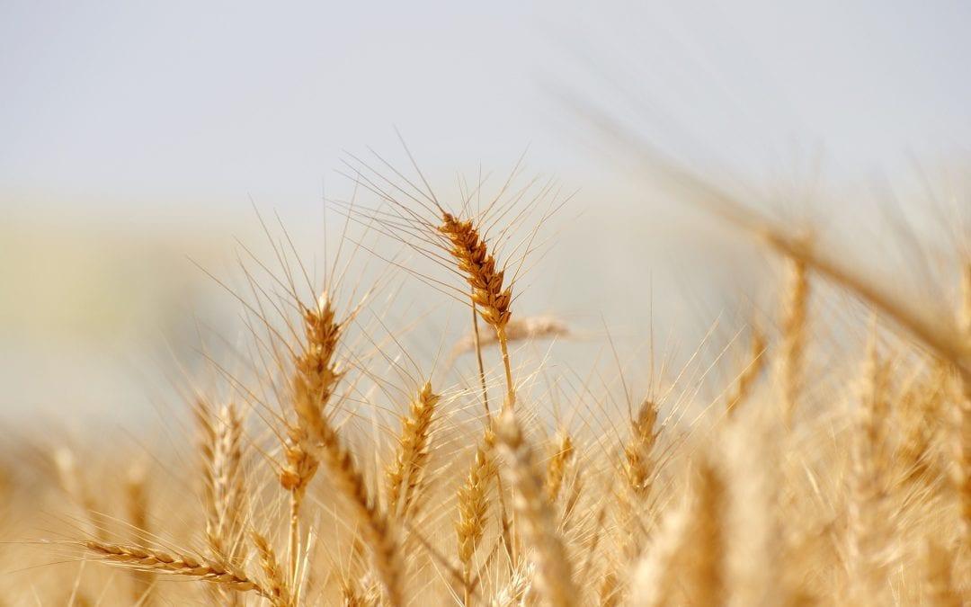 Pressemitteilung zur Schließung der Landwirtschaftsschule in Stadtbergen